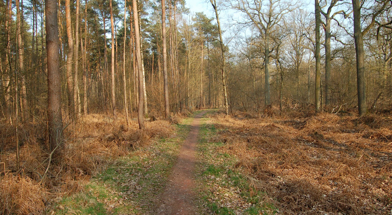 Sécurisation en forêt domaniale