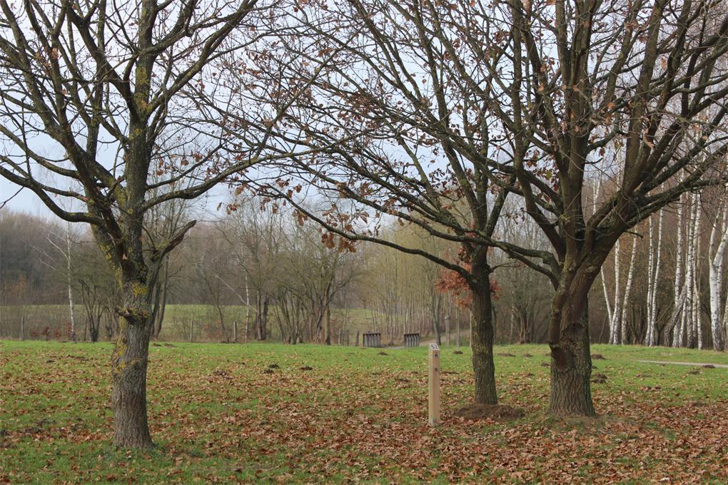 le parcours permanent d'orientation du Parc de la Porte du Hainaut