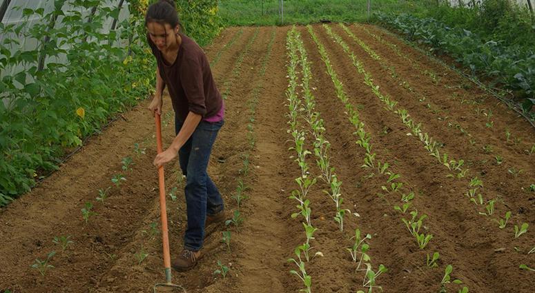 La solidarité agricole porte un nom, Arcade !
