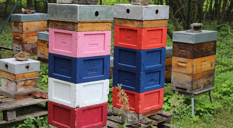 Alain René Leconte «Il faut développer le restaurant des abeilles»