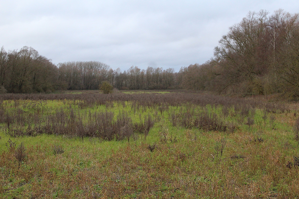 Le silence des boues sur Mortagne-du-Nord et Château l'Abbaye