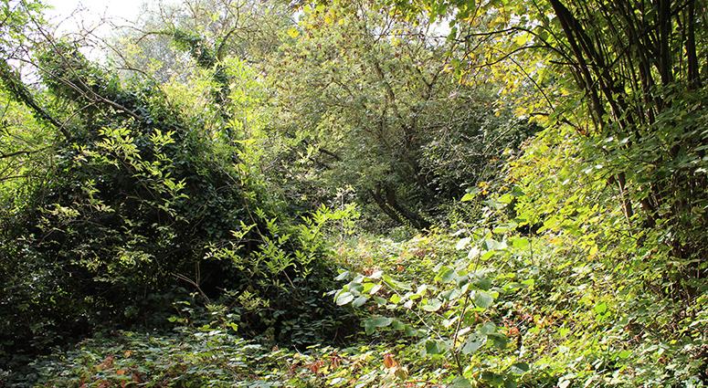 Le «Bois Trinquet», la rupture politique «d'écologie durable» à Trith-st-Léger
